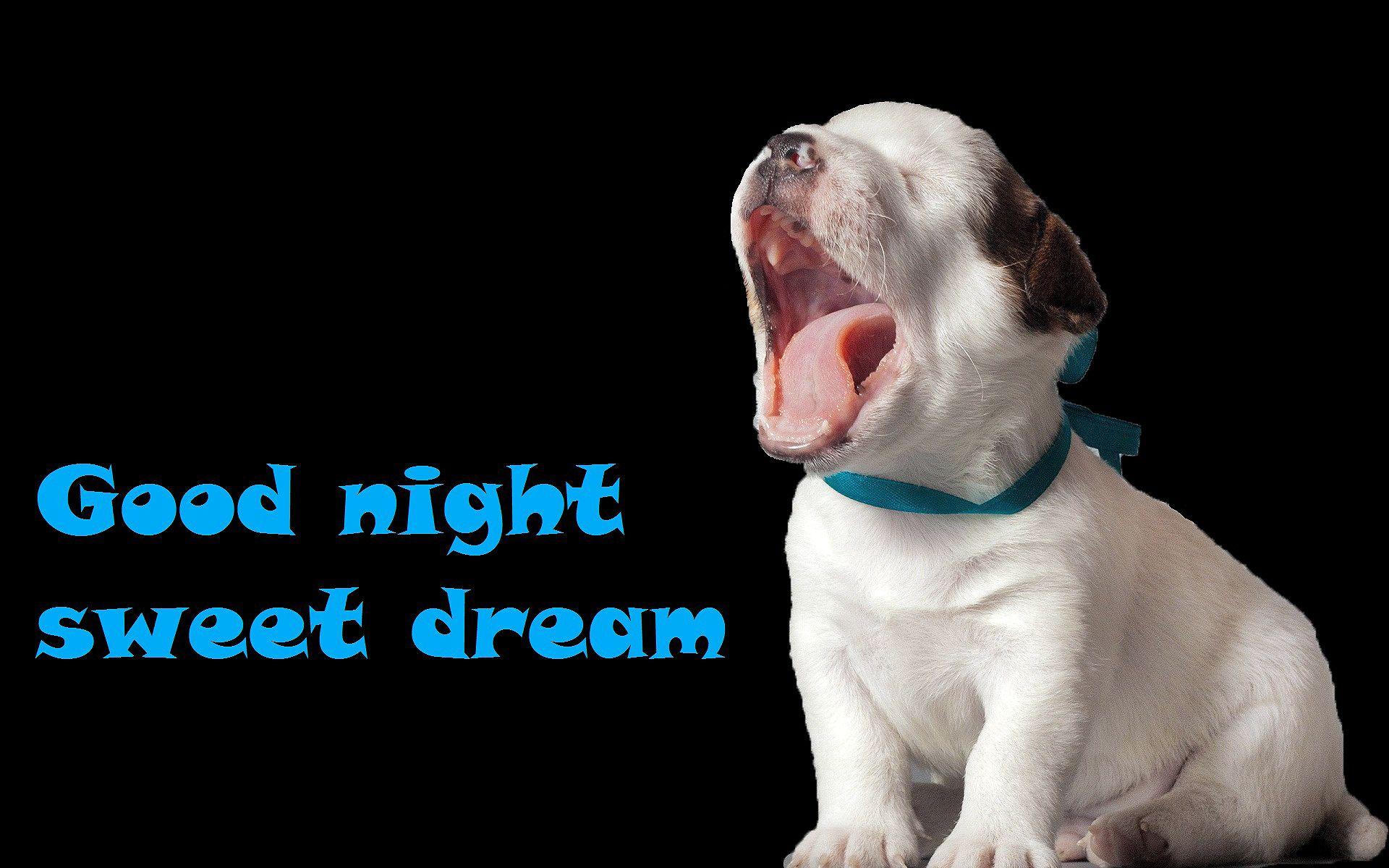 Yawing Cute Pup Good Night Jpg 1920 1200 Good Night Funny Good Night Sweet Dreams Funny Good Night Images