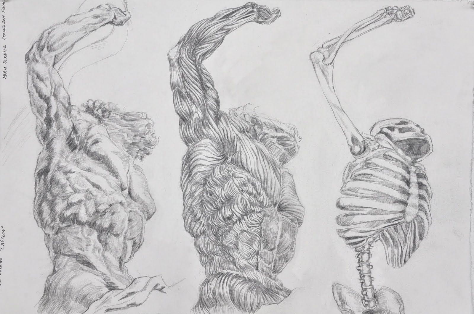 Figure Drawing And Anatomy Examples Of Final Project
