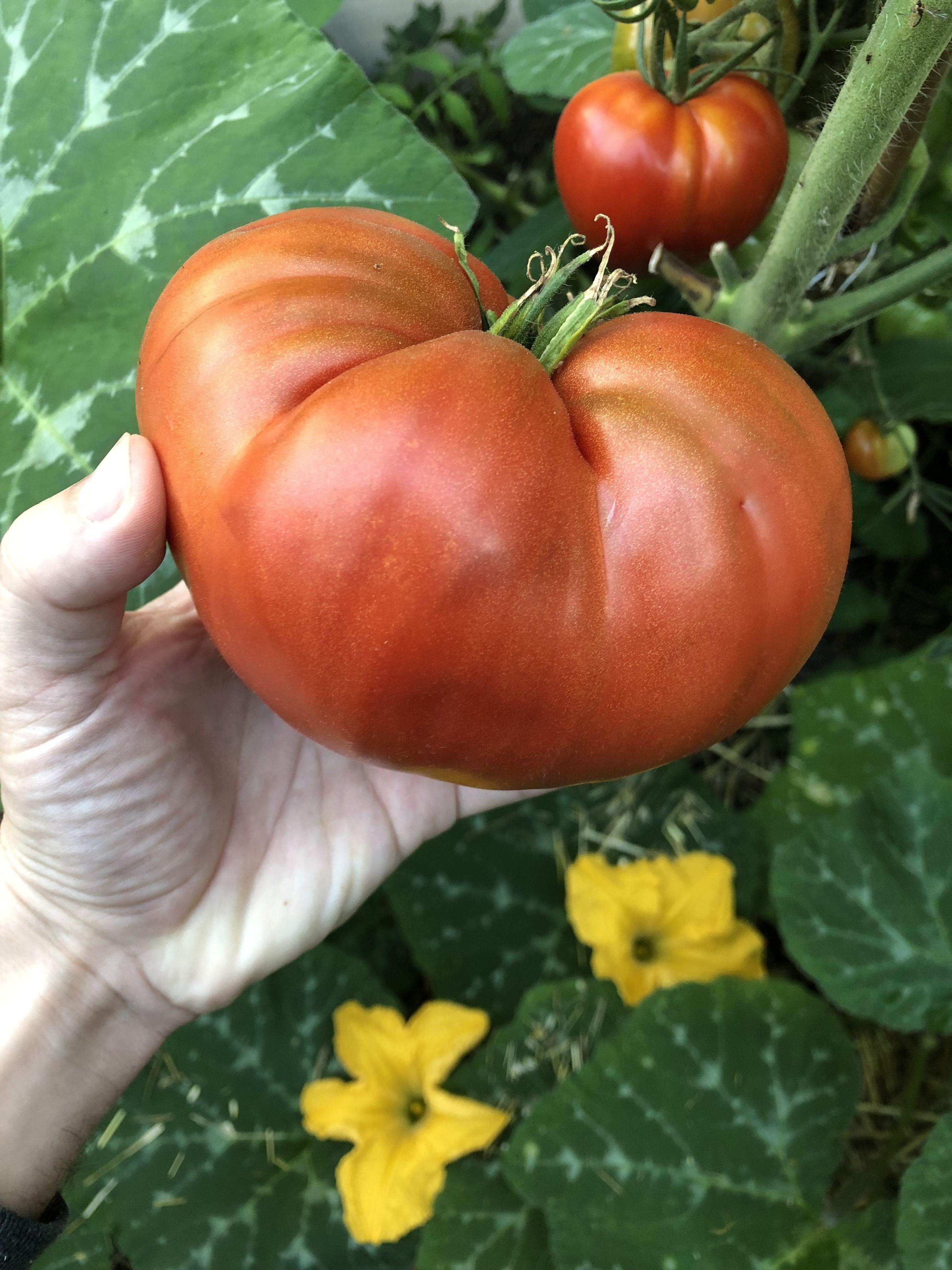 Épinglé sur Tous Jardiniers