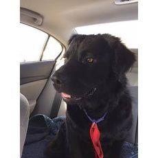Brady Hope Animal Rescue Durham North Carolina Pets