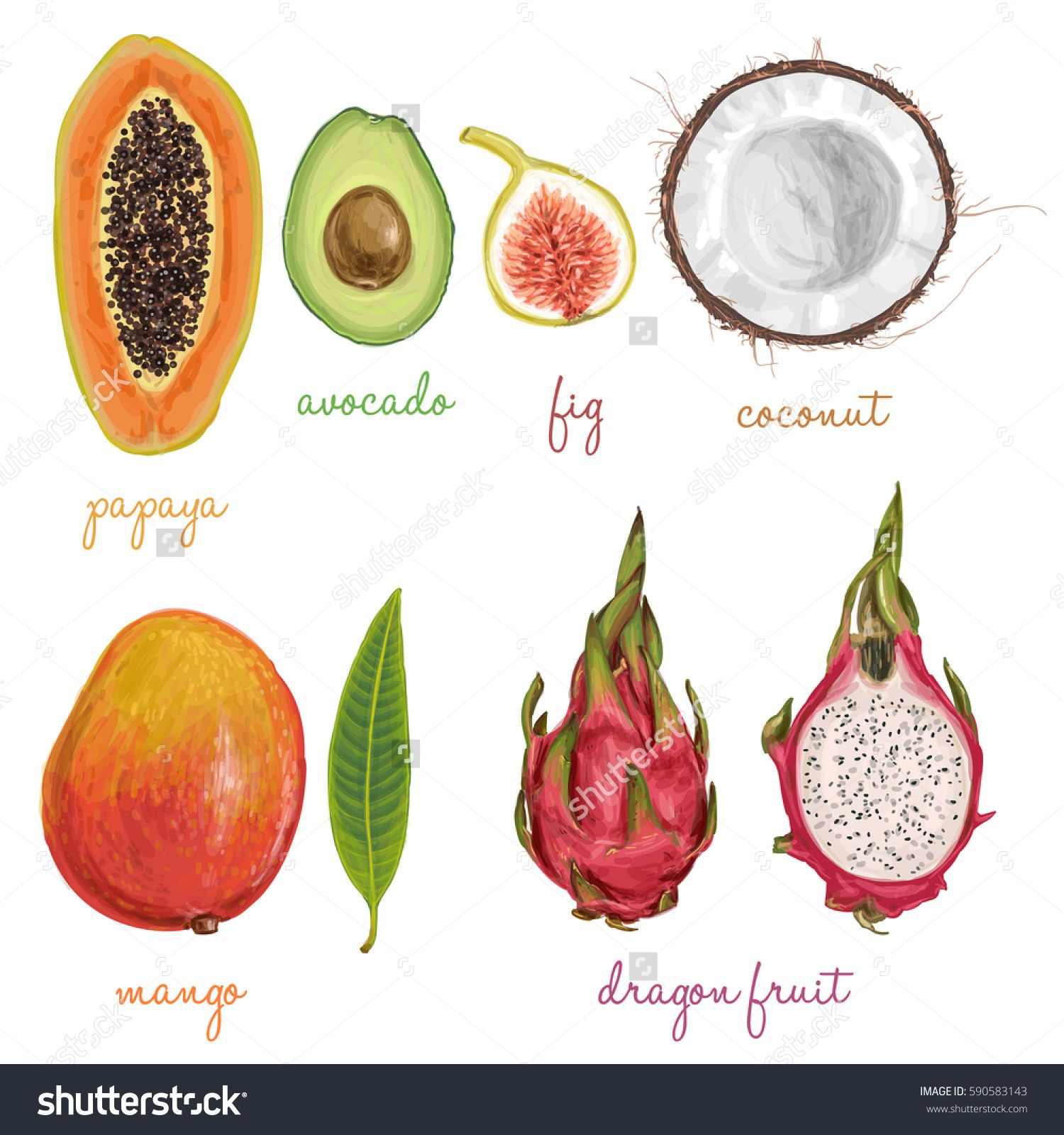 Different Fruits Painted With Watercolors Fruits Drawing Fruit