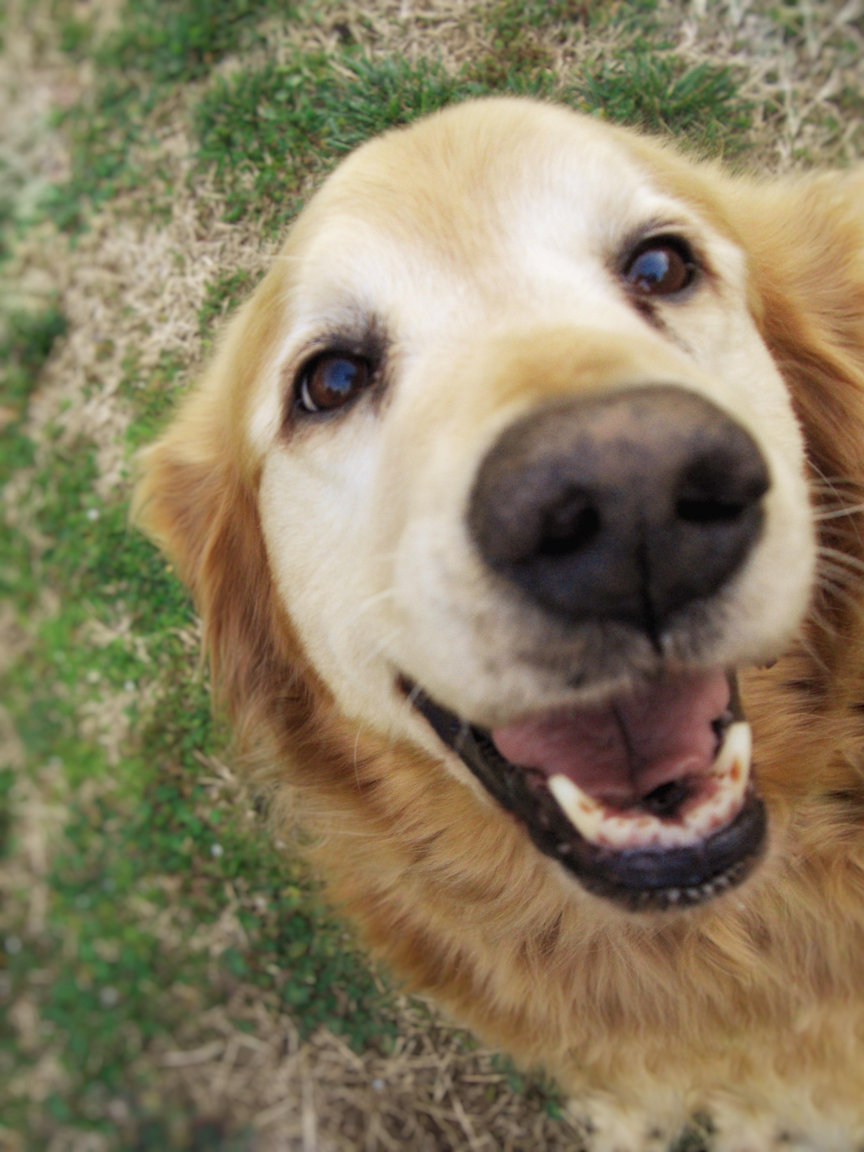 Helloo human iftpgblct cute uc pinterest dog