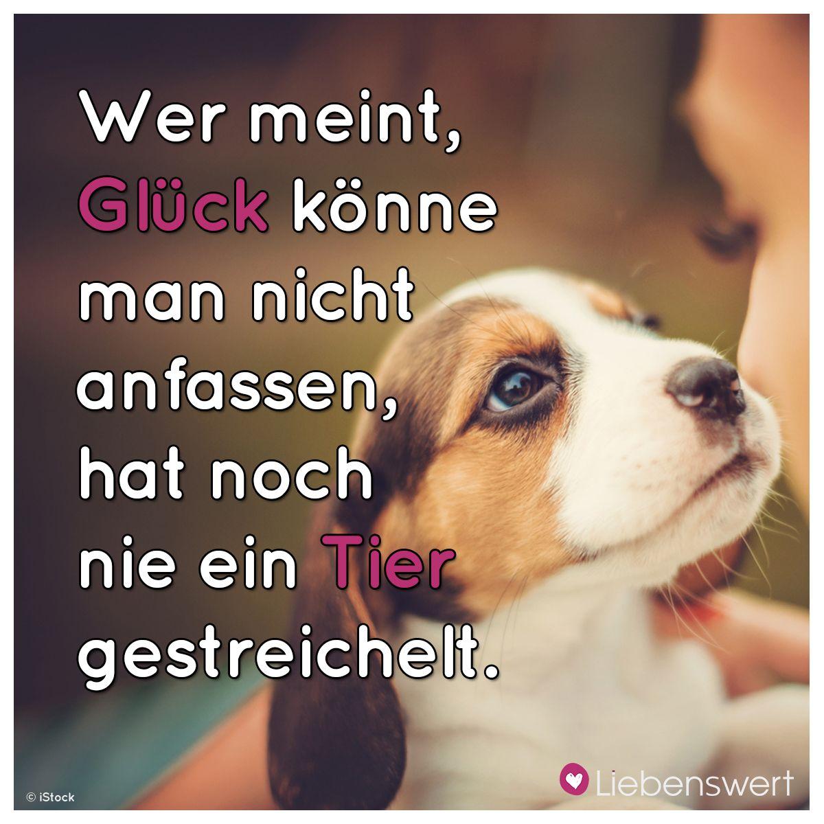 spr che f r tierliebhaber best quotes in german pinterest spr che hunde und tier. Black Bedroom Furniture Sets. Home Design Ideas