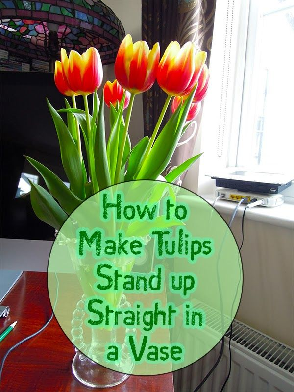 Making Tulips Stand Straight Tulips Arrangement Tulips In Vase Tulips