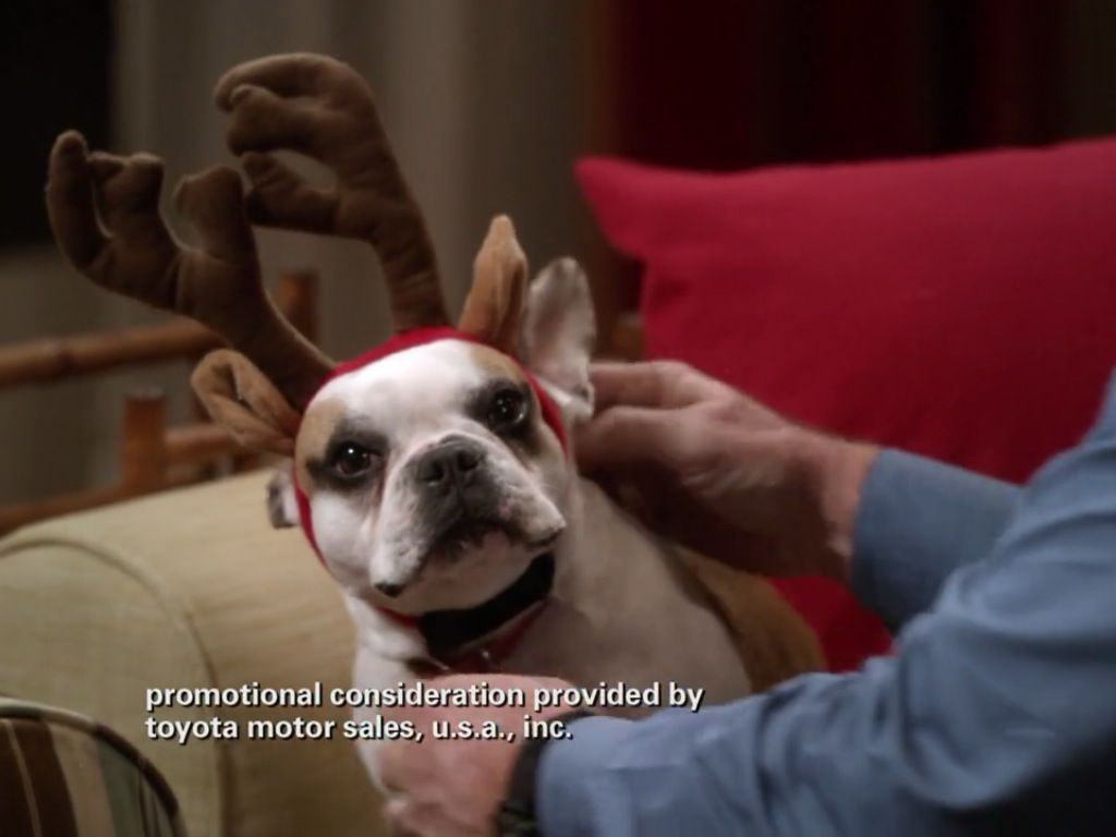 Stella From Modern Family Cutest Dog On Tv With Images