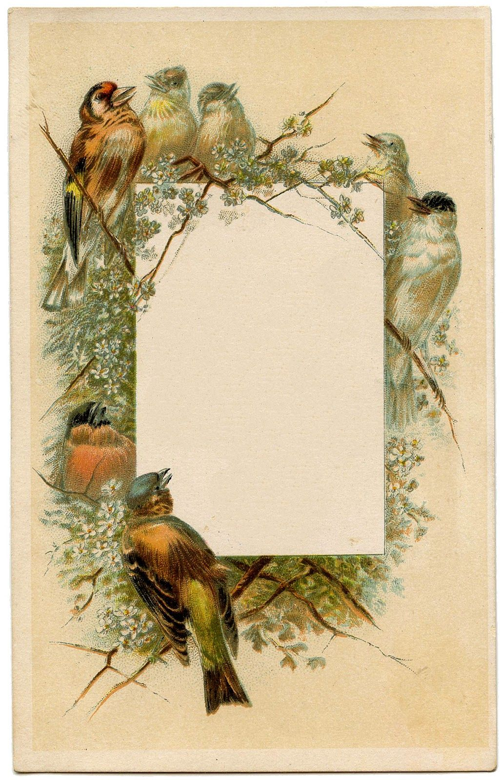 Vintage Frames Birds and Flowers Graphics fairy