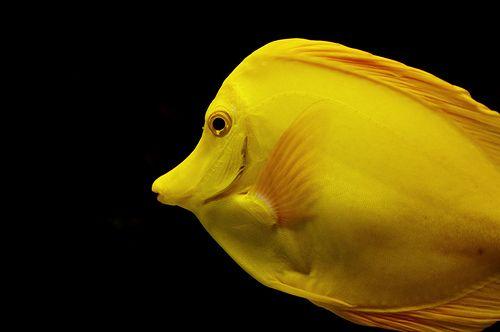 Yellow Fever Yellow Palette Yellow Black N Yellow