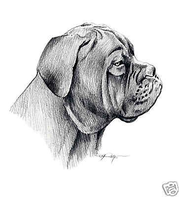 Dogue De Bordeaux By D J Rogers Dogo De Burdeos Burdeos Dibujos