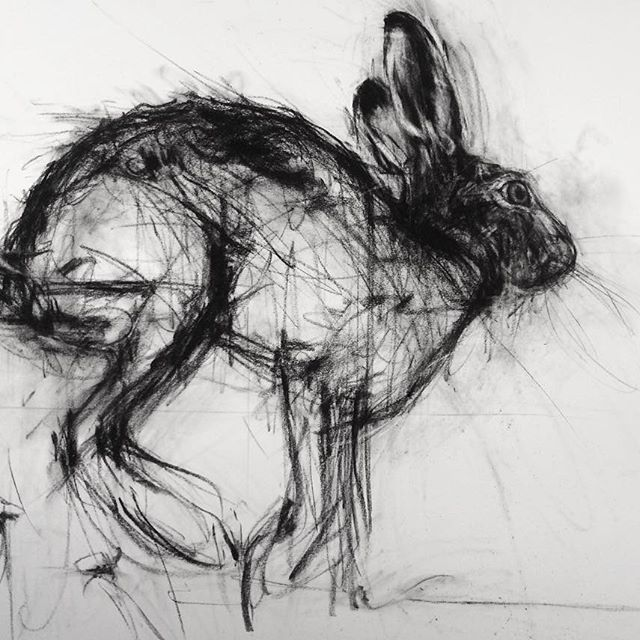 Under construction... European Hare #brownhare #charcoaldrawing #wip