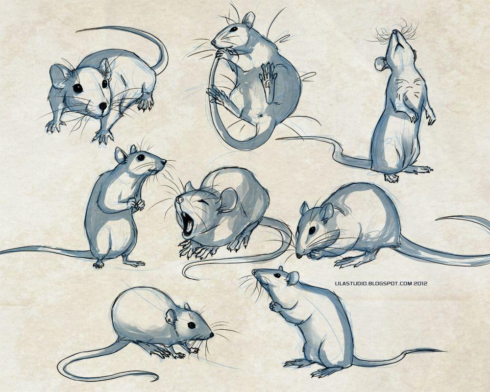 Standing rat drawing