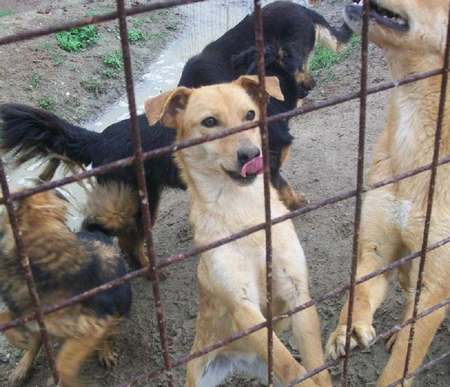 URGENT! List of DOGS available for VIRTUAL ADOPTION at