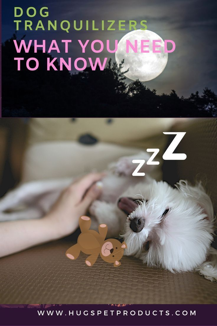 Dog Tranquilizers What You Need to Know Meds for