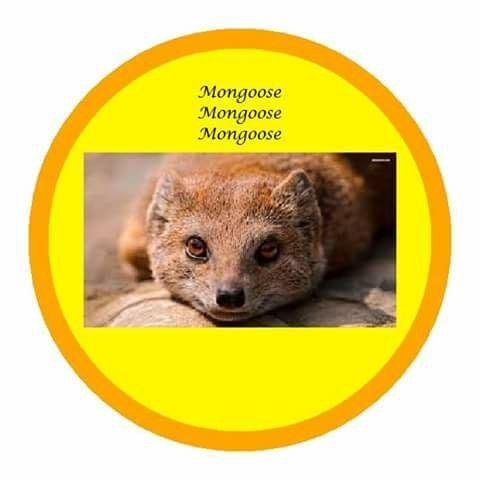 Mongoose vedic astrology birth chart
