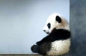 schattige baby diertjes - Google zoeken