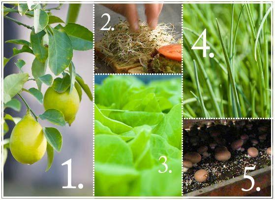 Five Edibles You Can Grow Indoors Edible Garden Smith 400 x 300