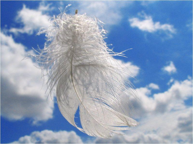 Ангелы и перья картинки