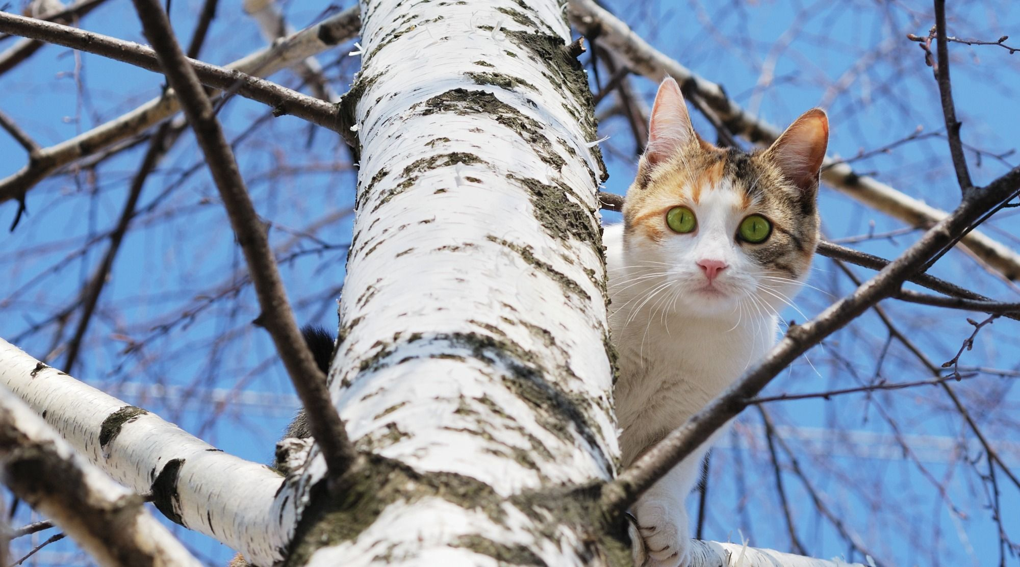 What Is A Cat S Favorite Kind Of Plant A Cat Tree Cats Cat Run Heartworm Awareness