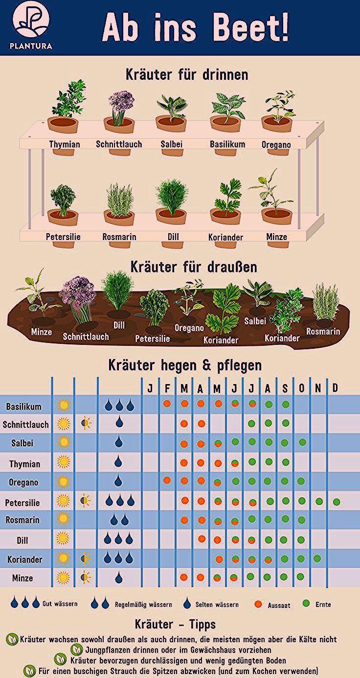 Photo of 10 Kräuter, die man selber vermehren kann – Plantura