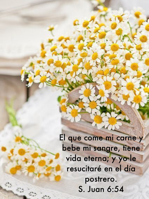 410 Ideas De Mi Proverbio Proverbios Biblia Biblia Reina Valera 1960