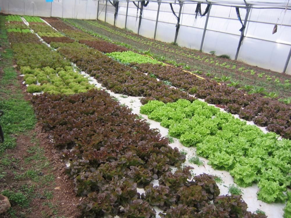 Ha crecido la venta y el consumo de alimentos orgánicos en la población, sin…