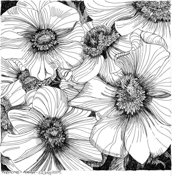 Anemones Flower Drawing Pen Art Art Drawings