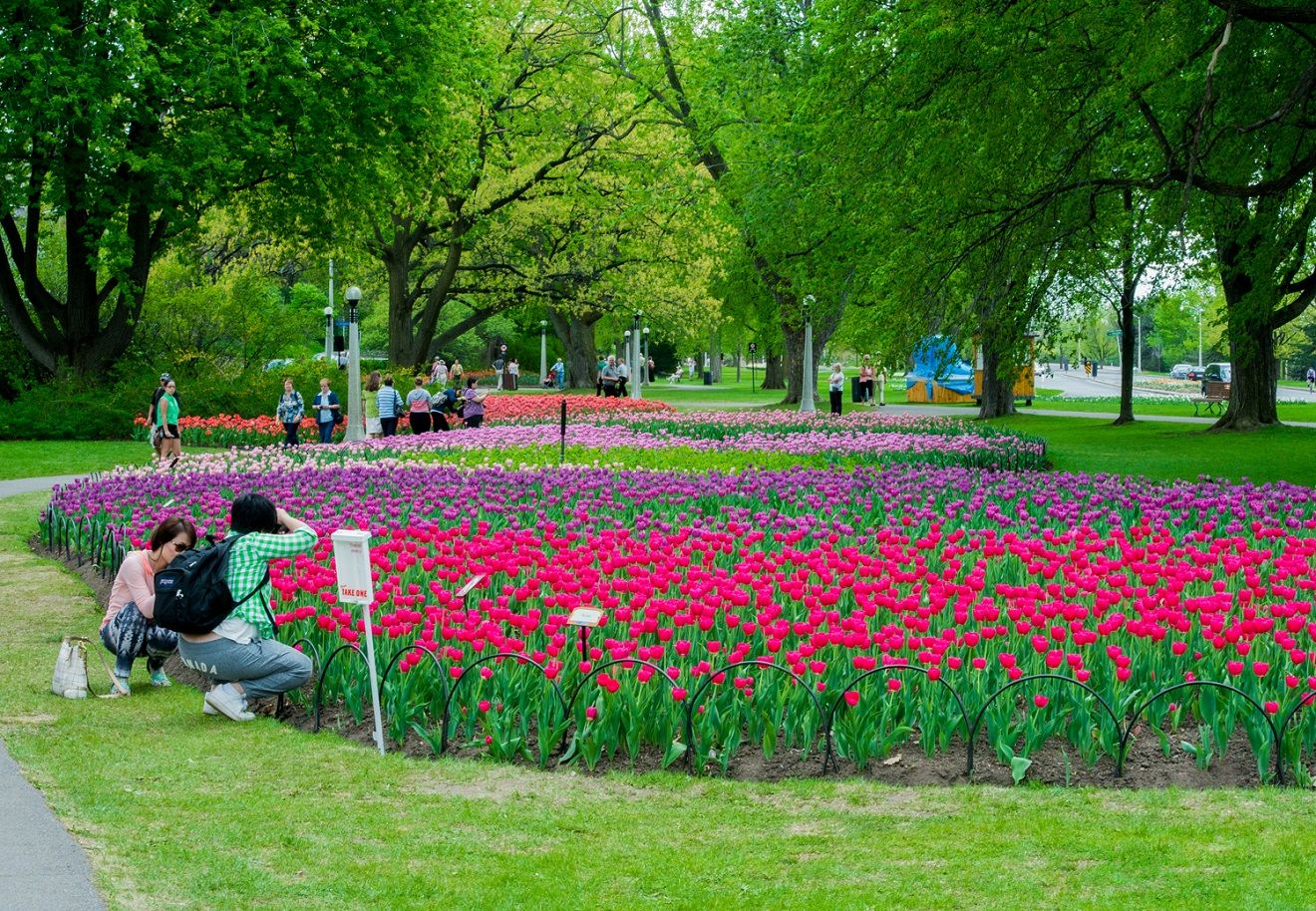 Skagit Valley Tulip Festival in full bloom | The Seattle Times