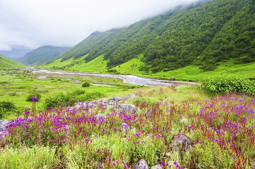Valley of Flowers National Park, Uttarakhand (With images ...