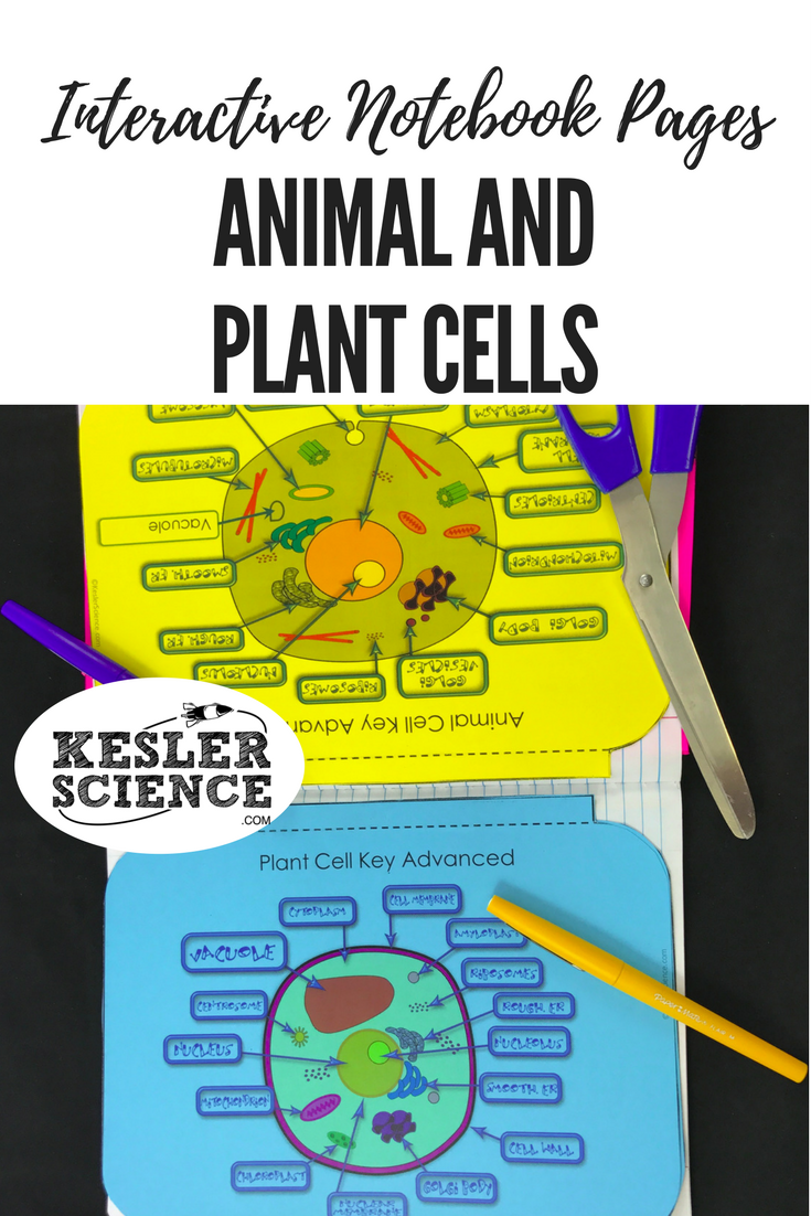 Structure of life interactive notebook pages science notebooks compare and contrast plant and animal cells with a venn diagram and a flip book pooptronica Gallery