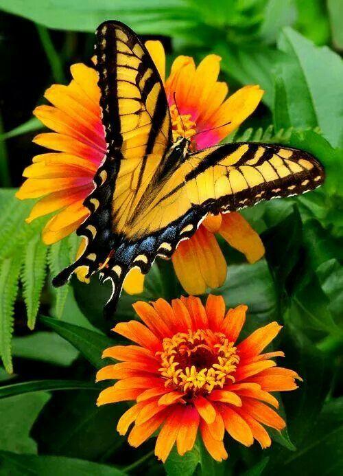 Very Pretty Butterfly Beautiful Butterflies Pinterest 蝶