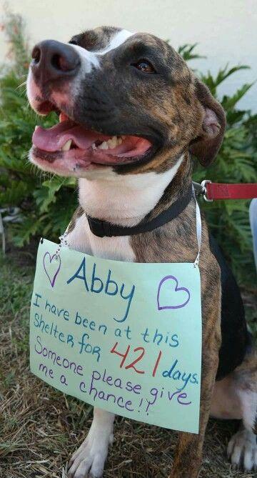 Abby - Boxer Pit Mix, Central Brevard Humane Society. Adoption fee - $128.