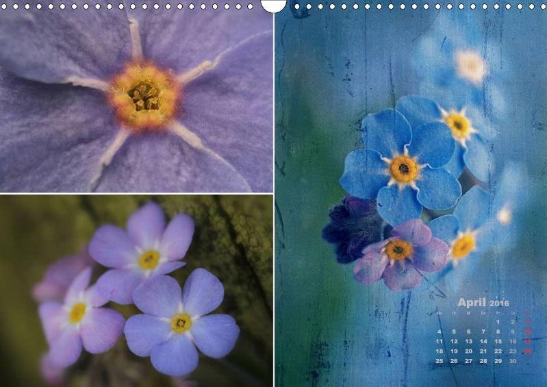 Blumenreise 2016 - CALVENDO Kalender von Arnold Joseph Hernegger