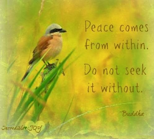 Quotes About Peace Awesome Peace Quote Via Www.facebookincrediblejoy  Quotes To Inspire .