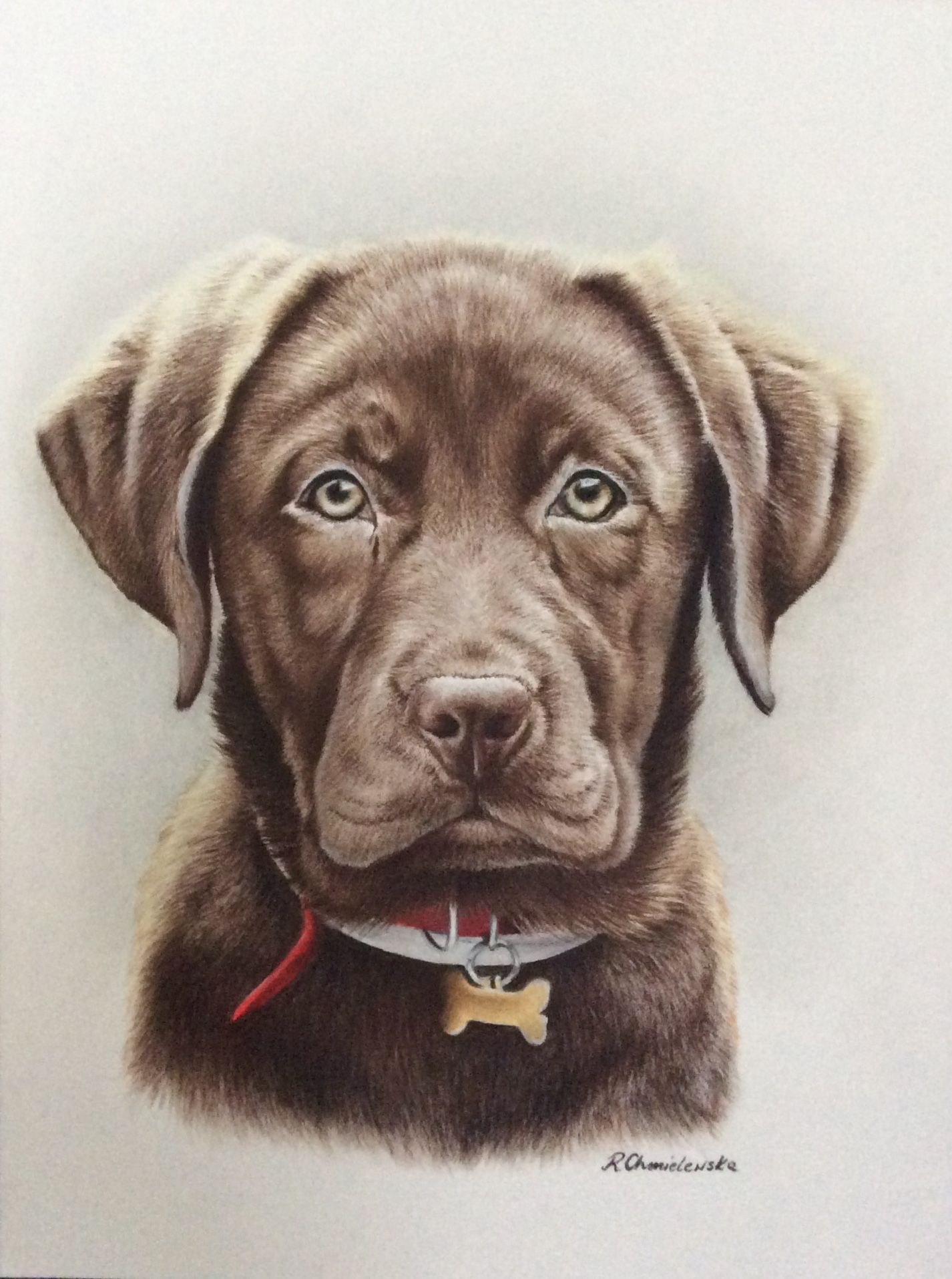 Chocolate Labrador In Pastel Pencils Pet Portraits Commissions