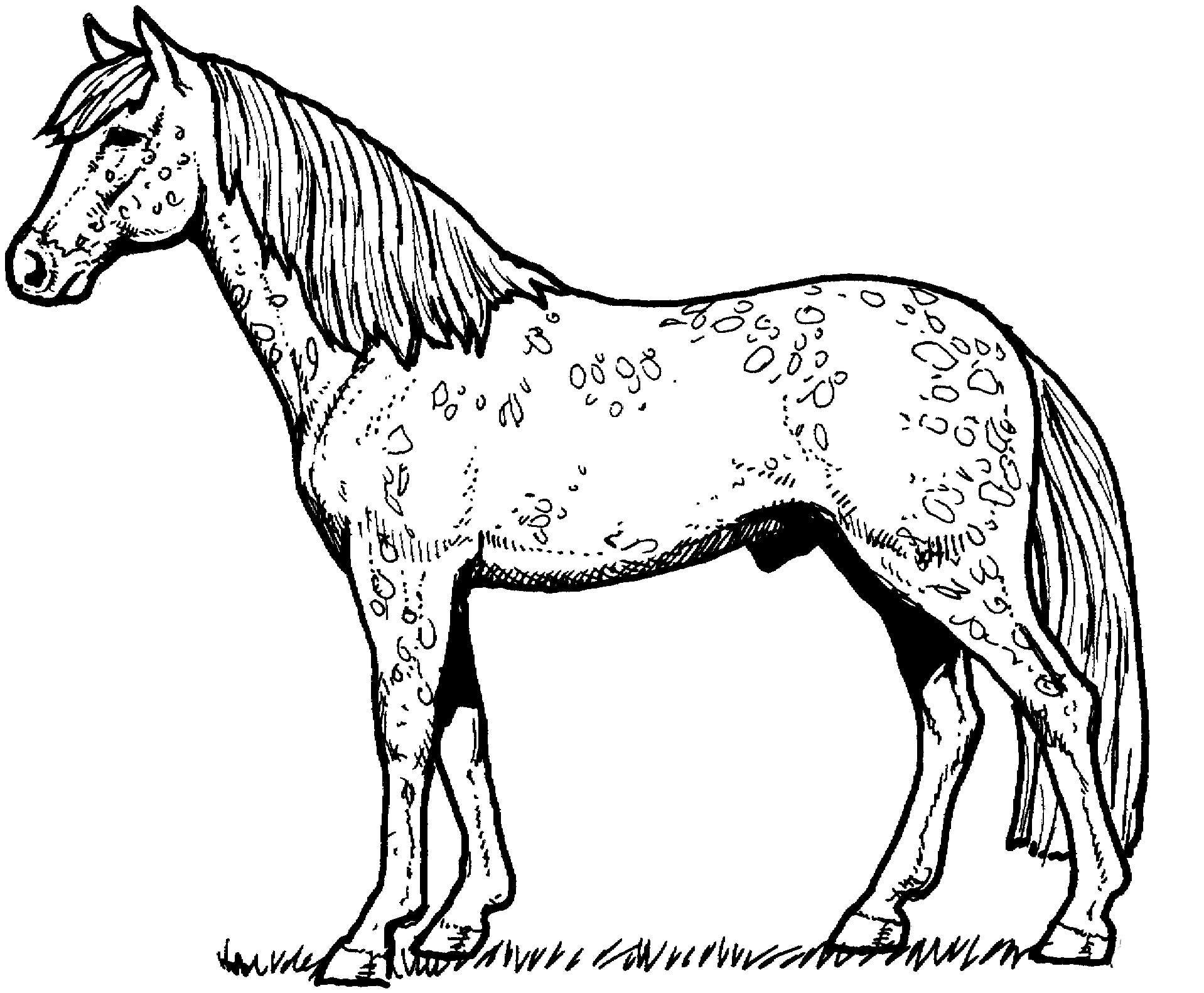 Appaloosa Horse Coloring Page Malvorlagen Pferde Malvorlagen Malvorlagen Tiere [ 1581 x 1918 Pixel ]