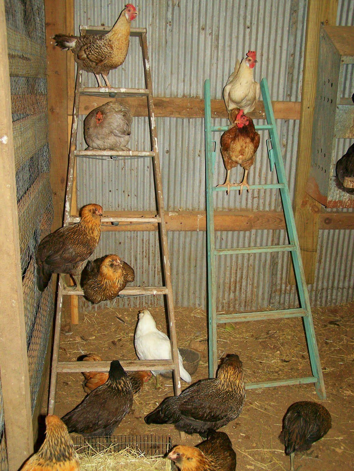 Chicken Coop And Barn Makeover Progress Poulailler Palette