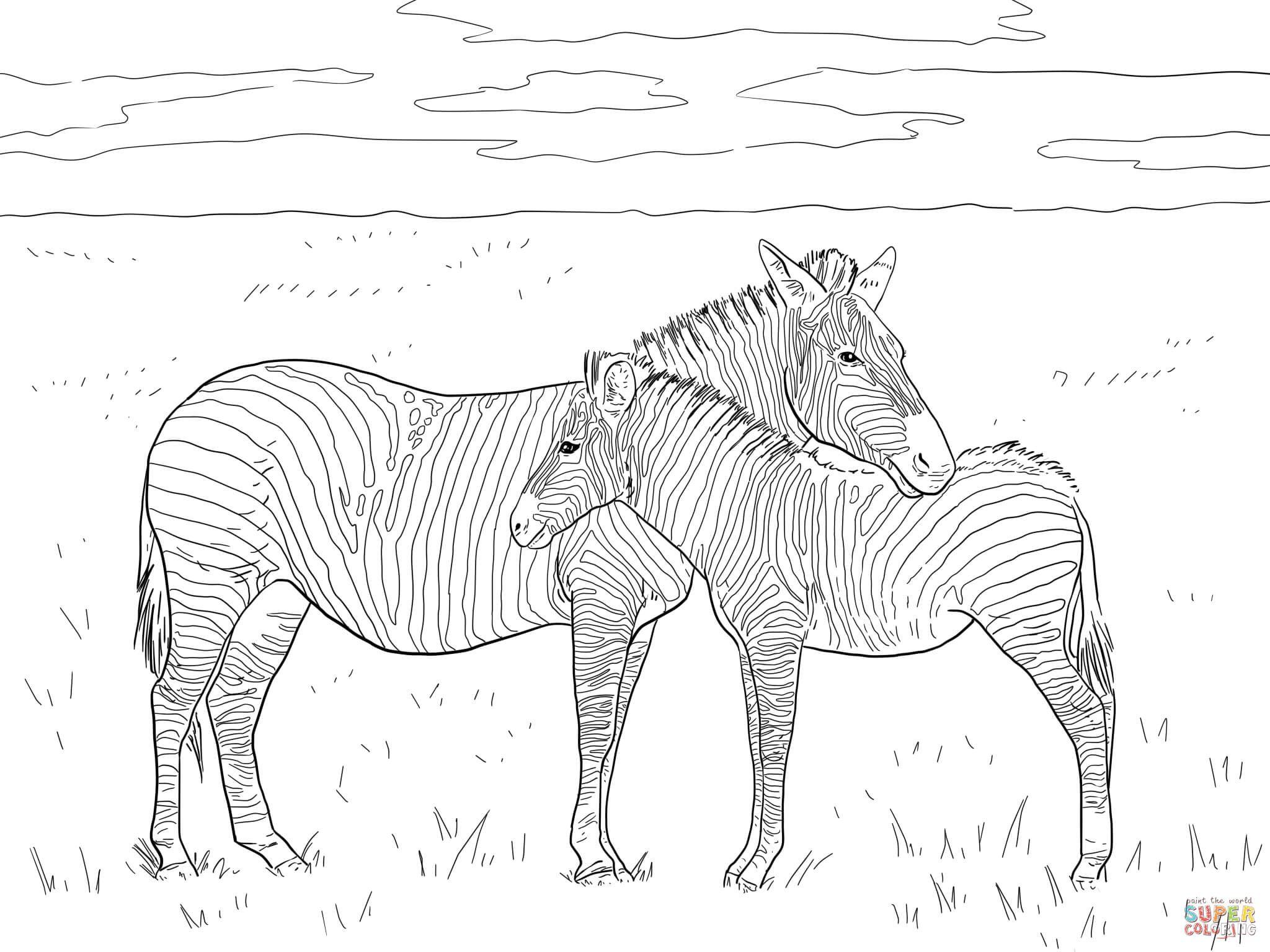 Grant S Plain Zebras Super Coloring Zebra Coloring Pages Zoo Animal Coloring Pages Animal Coloring Pages [ 1536 x 2048 Pixel ]