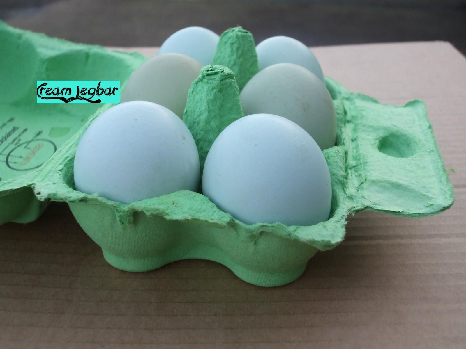 cream legbar eggs cream legbar pinterest egg