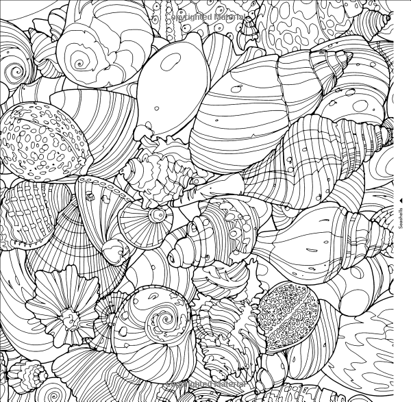 Shells Fantastic Collections A Coloring Book Of Amazing Things Real And Imagined Cities Steve McDonald Books