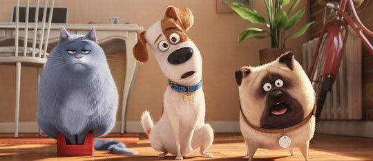 The Secret Life Of Pets Actors Voice Mel And Chloe Secret Life Of Pets Pets Movie Pets