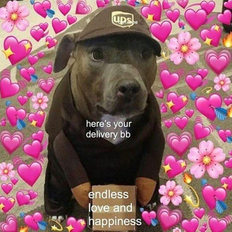 Memes Dogs Heart Meme Reaction Healthy Hearts Dog Cute Https Weheartit Com Entry 324158644 Cute Love Memes Cute Memes Love Memes