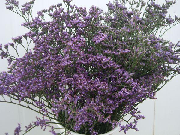 Limonium Caspia Flores Musacco Flowers Types Of Flowers Buy Flowers Online