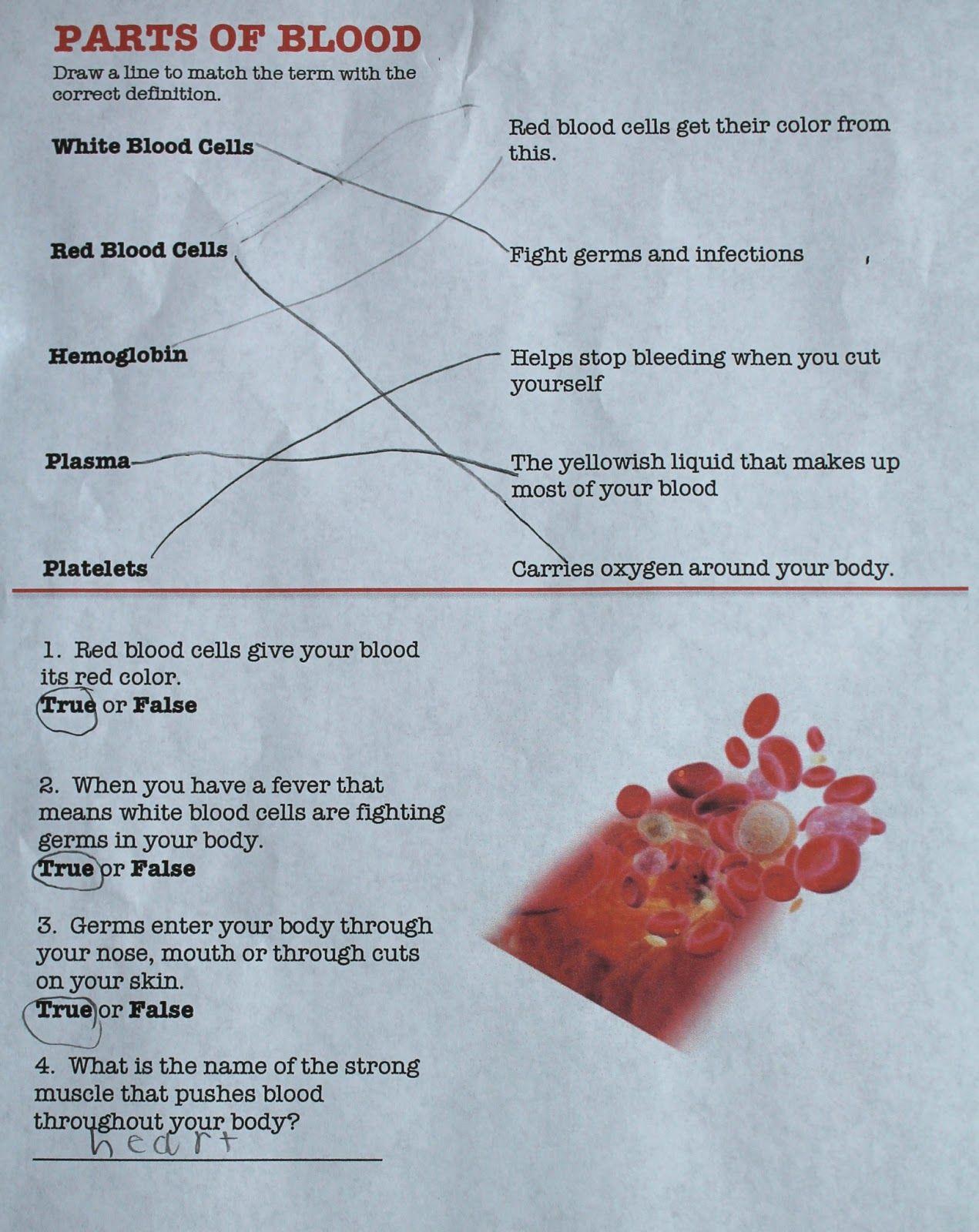 Pin On Pbl Human Anatomy