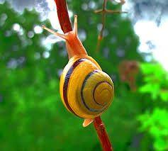 Risultati immagini per snail