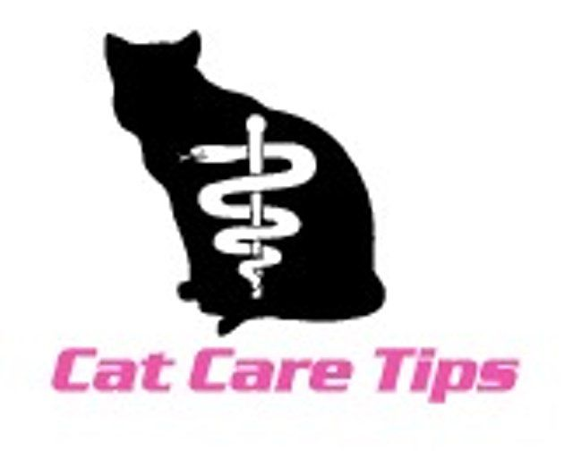 FREE Cat Care Tips - Heavens Safe Haven
