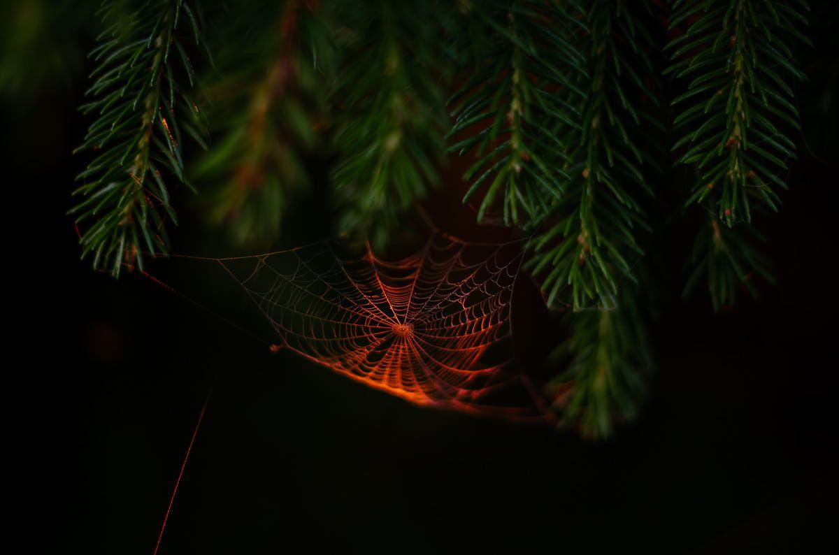 Golden Spiderweb By Jorma On 500px Plant Leaves Tartu Plants