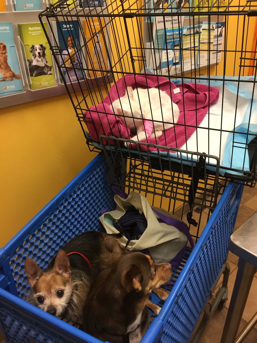 Vet appt Animal rescue, Animal control, Fur babies