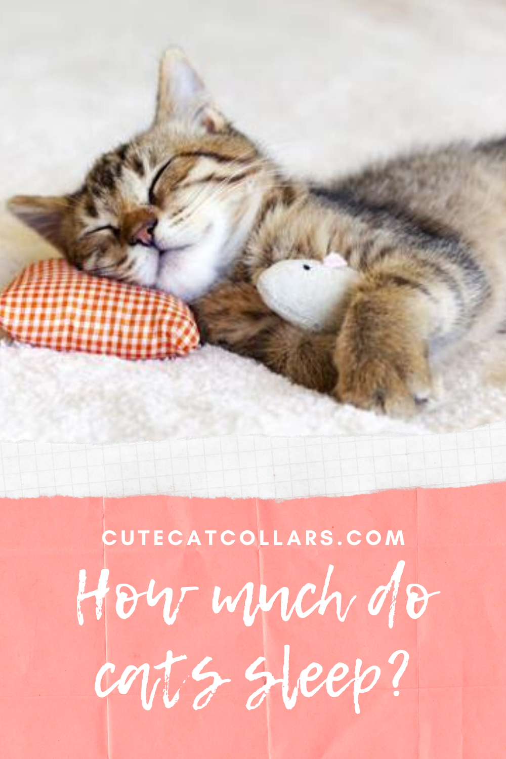How much do cats sleep? in 2020 Cat sleeping, Cats, Cat