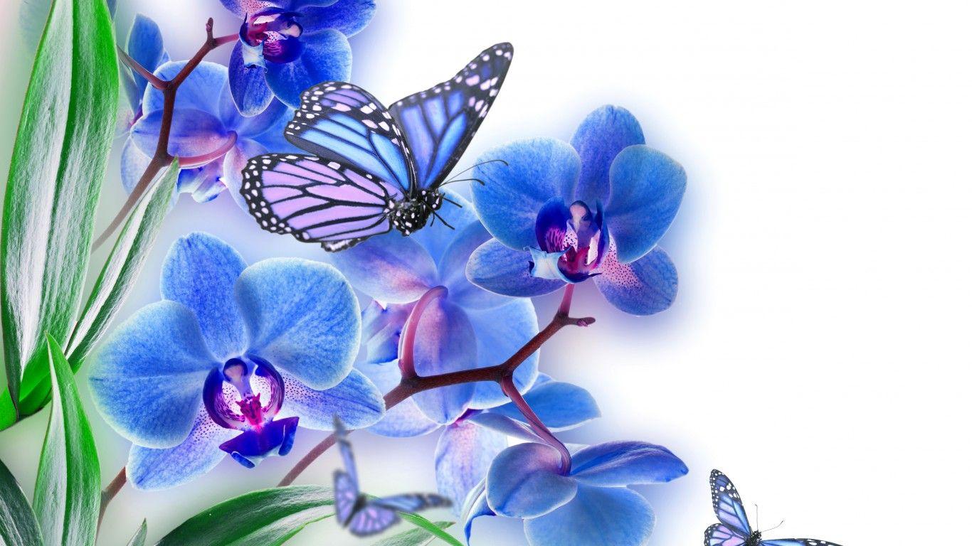Обои цветы, Коллаж. Разное foto 18