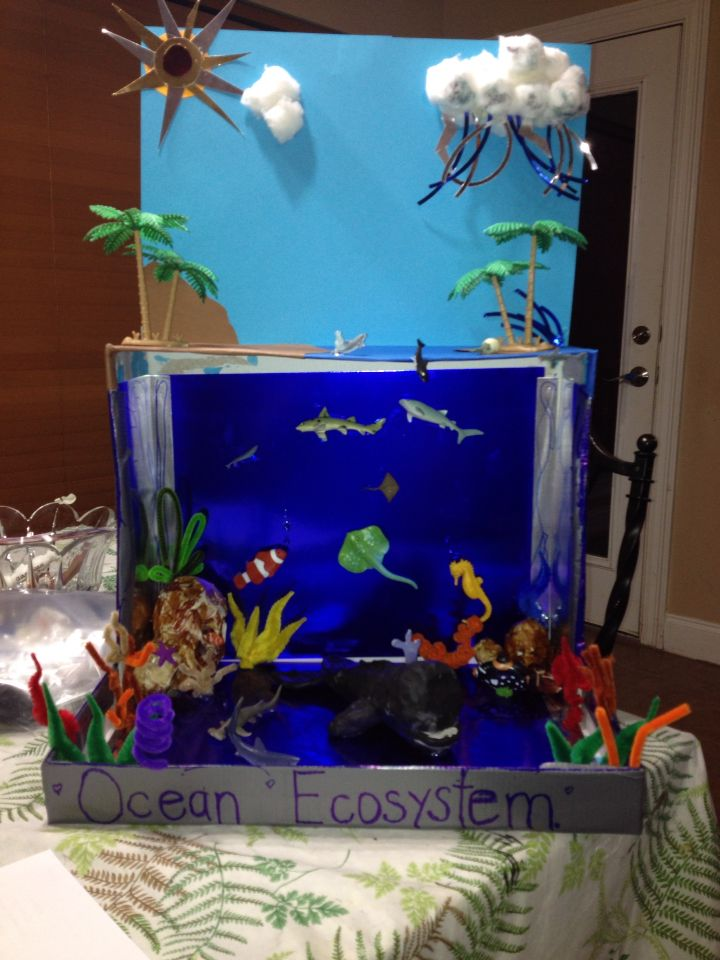 Kitchen Diorama Made Of Cereal Box: Aquarium School Project