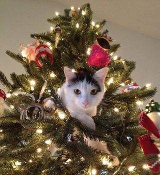 Cat In Tree Cat Christmas Tree Christmas Animals Christmas Cats